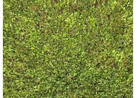 绿色青草绿草草坪草地背景贴图