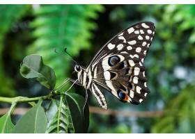 美丽的自然界蝴蝶