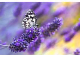 美丽生动的自然界蝴蝶