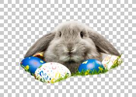 兔子宠物和复活节彩蛋