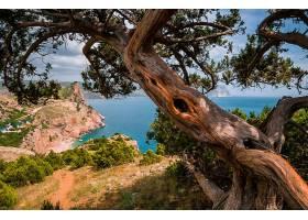 地球,海岸线,海,海岸,夏天,树,海湾,壁纸,图片