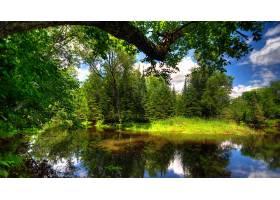 地球,河,树,夏天,自然,壁纸,图片