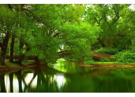 地球,河,树,桥梁,夏天,壁纸,图片