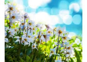地球,花,花,壁纸,(13)