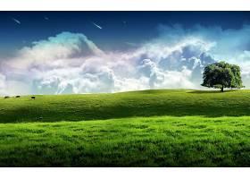 地球,A,轻柔的,世界,树,寂寞的,树,风景,领域,云,草,壁纸,图片