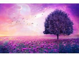 地球,A,轻柔的,世界,自然,树,寂寞的,树,领域,花,紫色,花,壁纸,图片