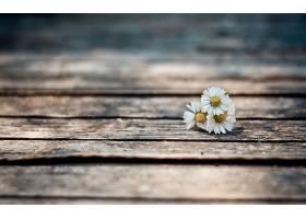 地球,雏菊,花,壁纸,(38)