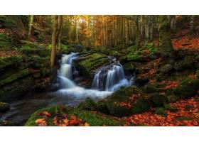 地球,溪流,自然,森林,秋天,瀑布,岩石,叶子,壁纸,图片