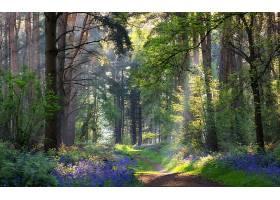 地球,小路,森林,夏天,壁纸,图片