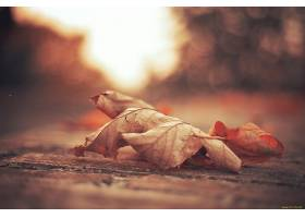 地球,叶子,壁纸,(38)