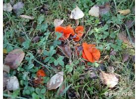 地球,叶子,自然,蘑菇,壁纸,图片
