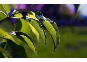 地球,叶子,自然,夏天,绿色的,壁纸,图片
