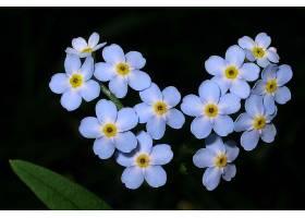 地球,花,花,壁纸,(409)图片