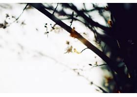 地球,花,花,壁纸,(410)图片