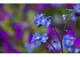 地球,花,花,壁纸,(412)图片