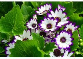 地球,花,花,壁纸,(413)图片