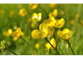 地球,花,花,壁纸,(415)图片