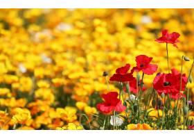 地球,花,花,壁纸,(418)图片