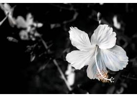 地球,花,花,壁纸,(419)图片