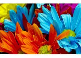 地球,花,花,壁纸,(42)图片
