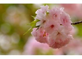 地球,花,花,壁纸,(420)图片