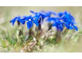 地球,花,花,壁纸,(422)图片