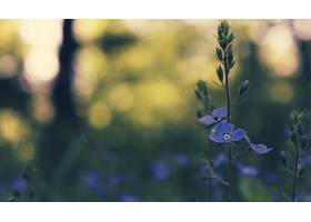 地球,花,花,壁纸,(426)图片