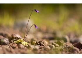 地球,花,花,壁纸,(427)图片