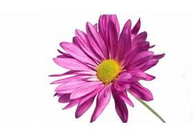 地球,花,花,壁纸,(429)图片