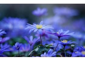 地球,花,花,壁纸,(433)图片