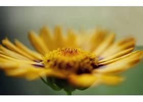 地球,花,花,壁纸,(434)图片