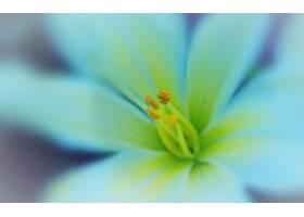 地球,花,花,壁纸,(435)图片