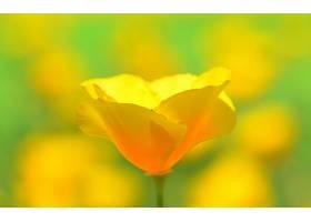 地球,花,花,壁纸,(436)图片