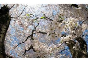 地球,花,花,壁纸,(437)图片