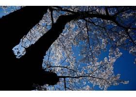 地球,花,花,壁纸,(439)图片