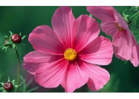 地球,花,花,壁纸,(44)图片