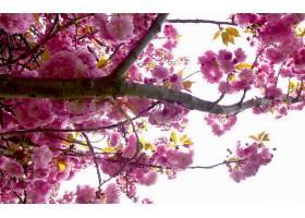 地球,花,花,壁纸,(441)图片