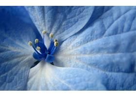 地球,花,花,壁纸,(442)