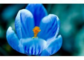 地球,花,花,壁纸,(443)图片
