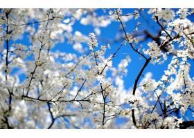 地球,花,花,壁纸,(444)图片