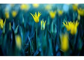 地球,花,花,壁纸,(446)图片