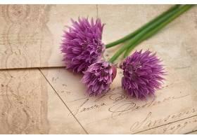 地球,花,花,壁纸,(447)图片