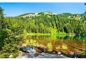 地球,湖,湖,森林,夏天,壁纸,(1)图片