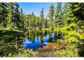 地球,湖,湖,森林,夏天,壁纸,图片