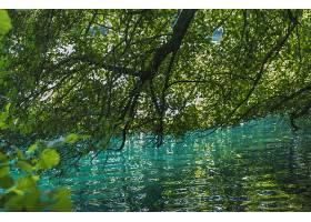 地球,湖,湖,树枝,叶子,水,夏天,壁纸,图片
