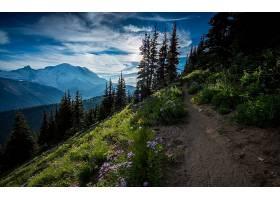 地球,风景,自然,森林,树,山,小路,云,壁纸,图片