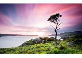 地球,风景,自然,苏格兰,日落,树,海,壁纸,图片