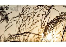 地球,草,领域,夏天,自然,太阳,壁纸,图片