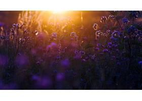 地球,草地,花,阳光,夏天,壁纸,图片