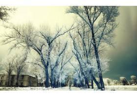 地球,冬天的,壁纸,(88)